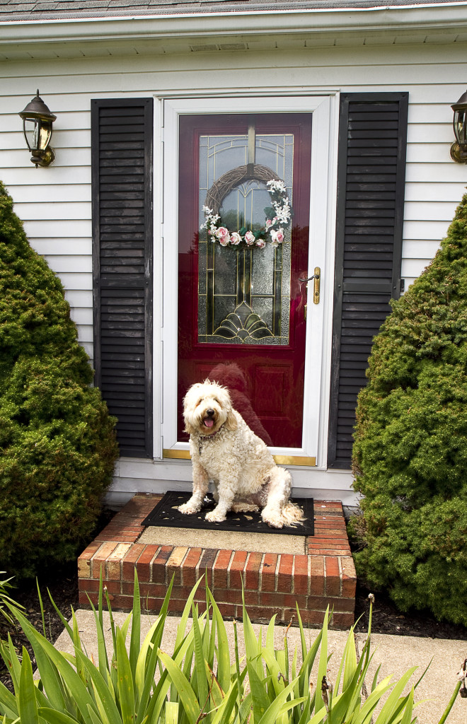Cute Dog Sitting by Front Door